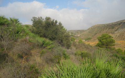 Amostragem de diferentes solos e plantas no distrito mineiro de La Unión