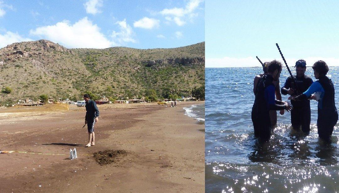 Échantillonnage des sédiments, de l'eau et du biote marin sur des sols contaminés et non contaminés à Murcie