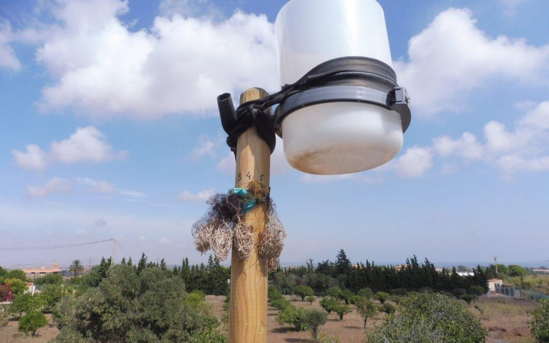 Nouveaux échantillons des plantes Tidensia dans le district minier de Cartaghène-La Unión