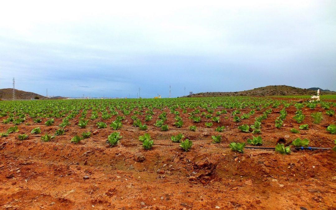 Amostragem de solos em zonas agrícolas de Cartagena