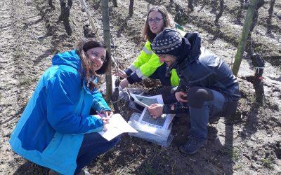 Amostragem de solo na área de estudo de Léognan (França)