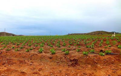 Muestreo de suelos en zonas agrícolas de Cartagena